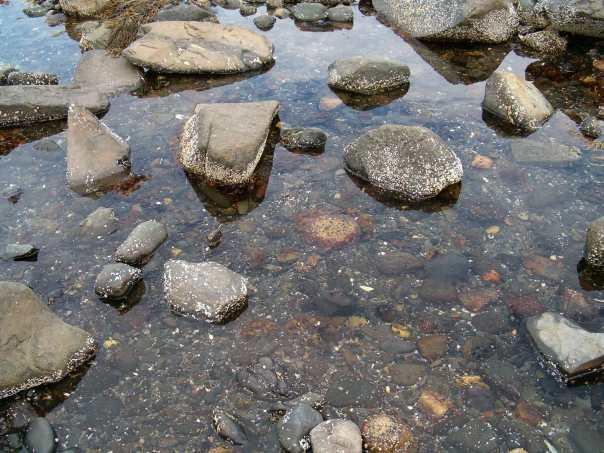 Tidal Pool in Hampton, New Hampshire