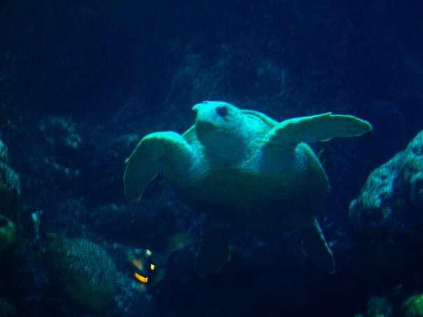 Sea Turtle at the New England Aquarium