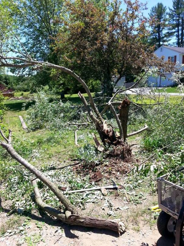 Denise's destructive yard work in process this week