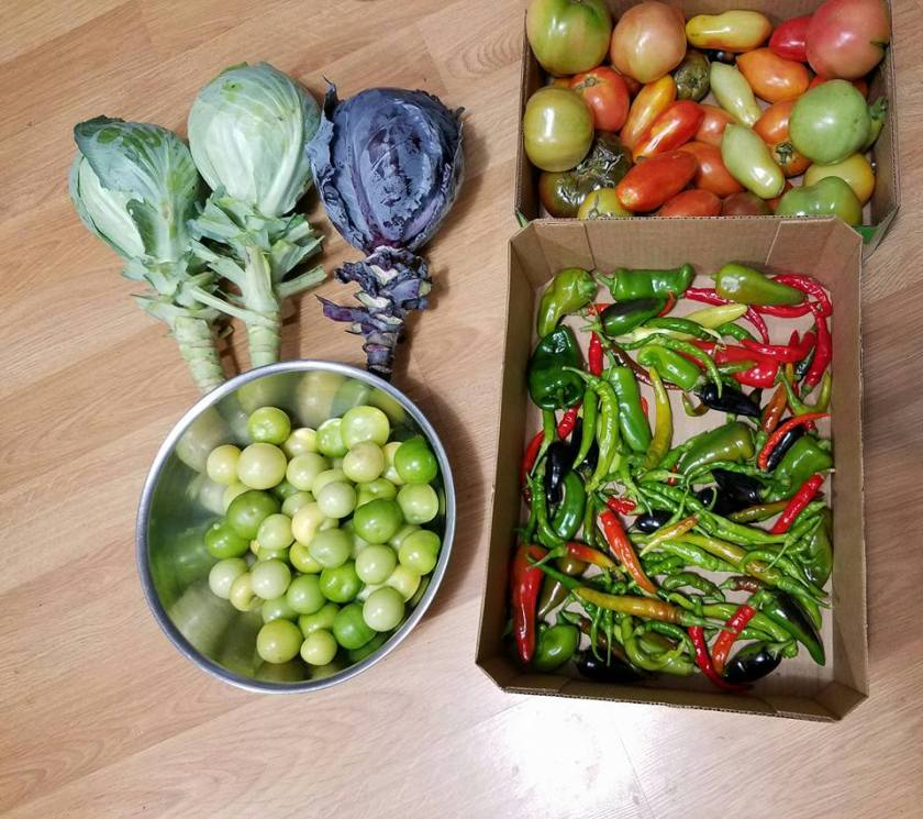 Part of Denise's garden harvest