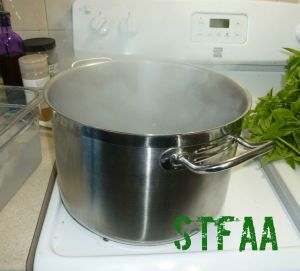 Pot of boiling water for me to dip the basil in