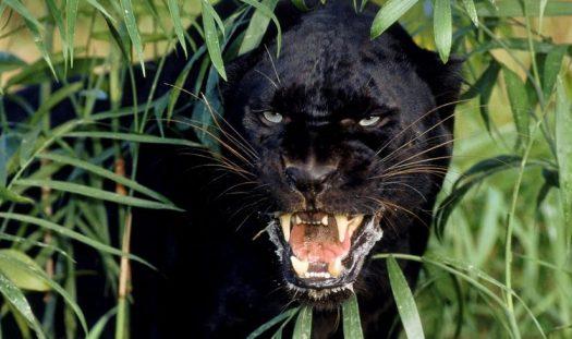 Animal Kingdom Cat