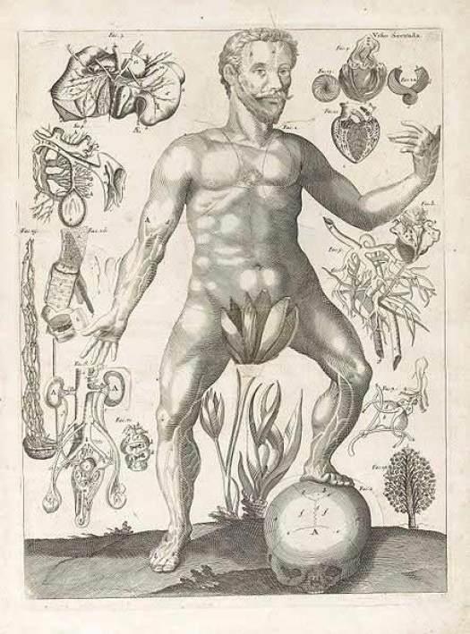 Man genitals diagram
