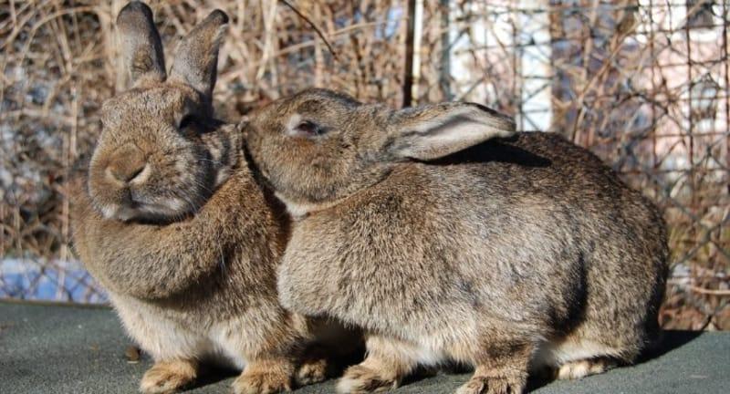 Spoiled Rabbits