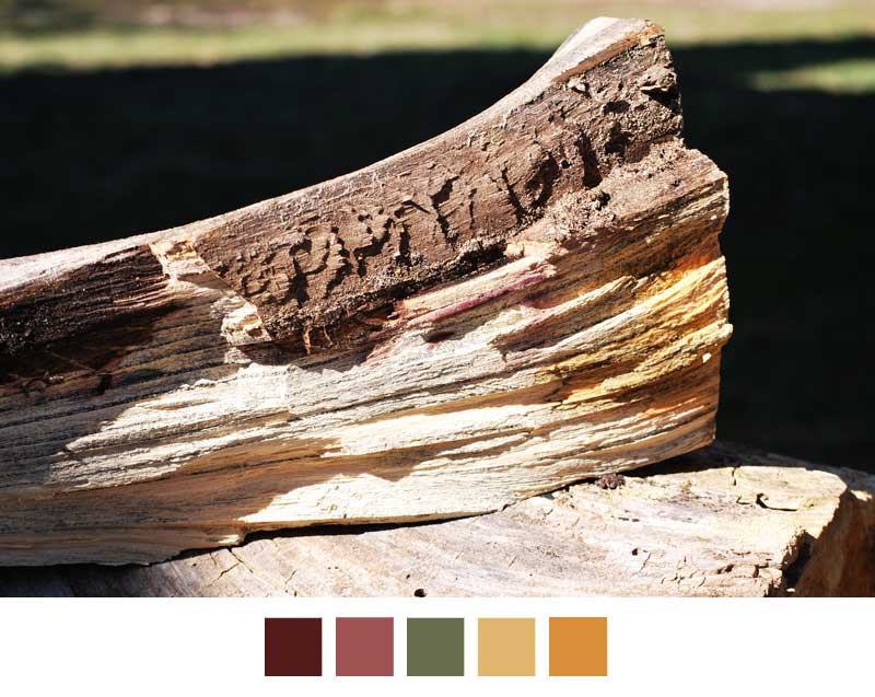 colors of split wood