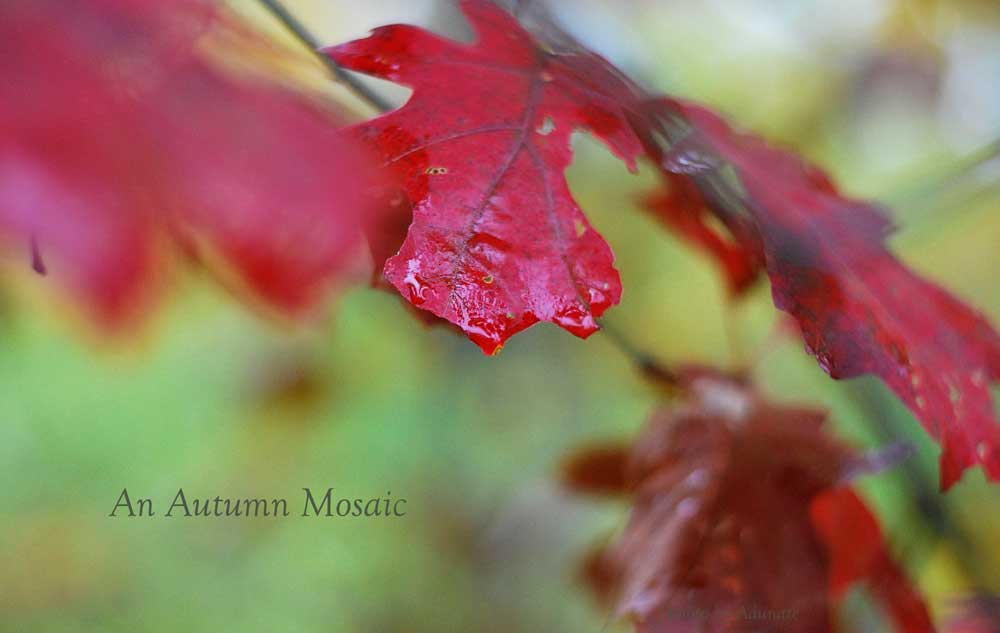 Autumn leaves 2014