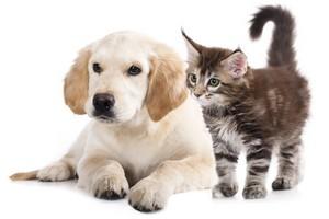 pets damage carpets