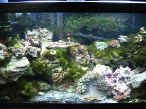 how to fix a bad saltwater aquarium