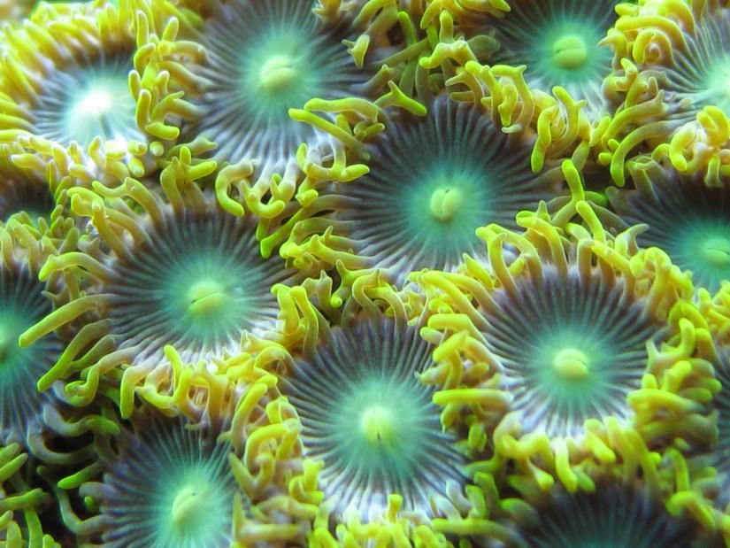 how to setup a reef aquarium