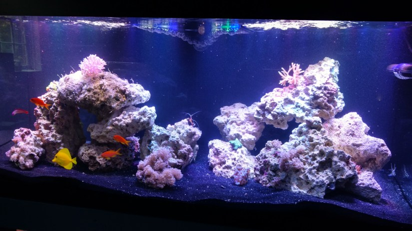 aquarium articles how to setup saltwater fish tank