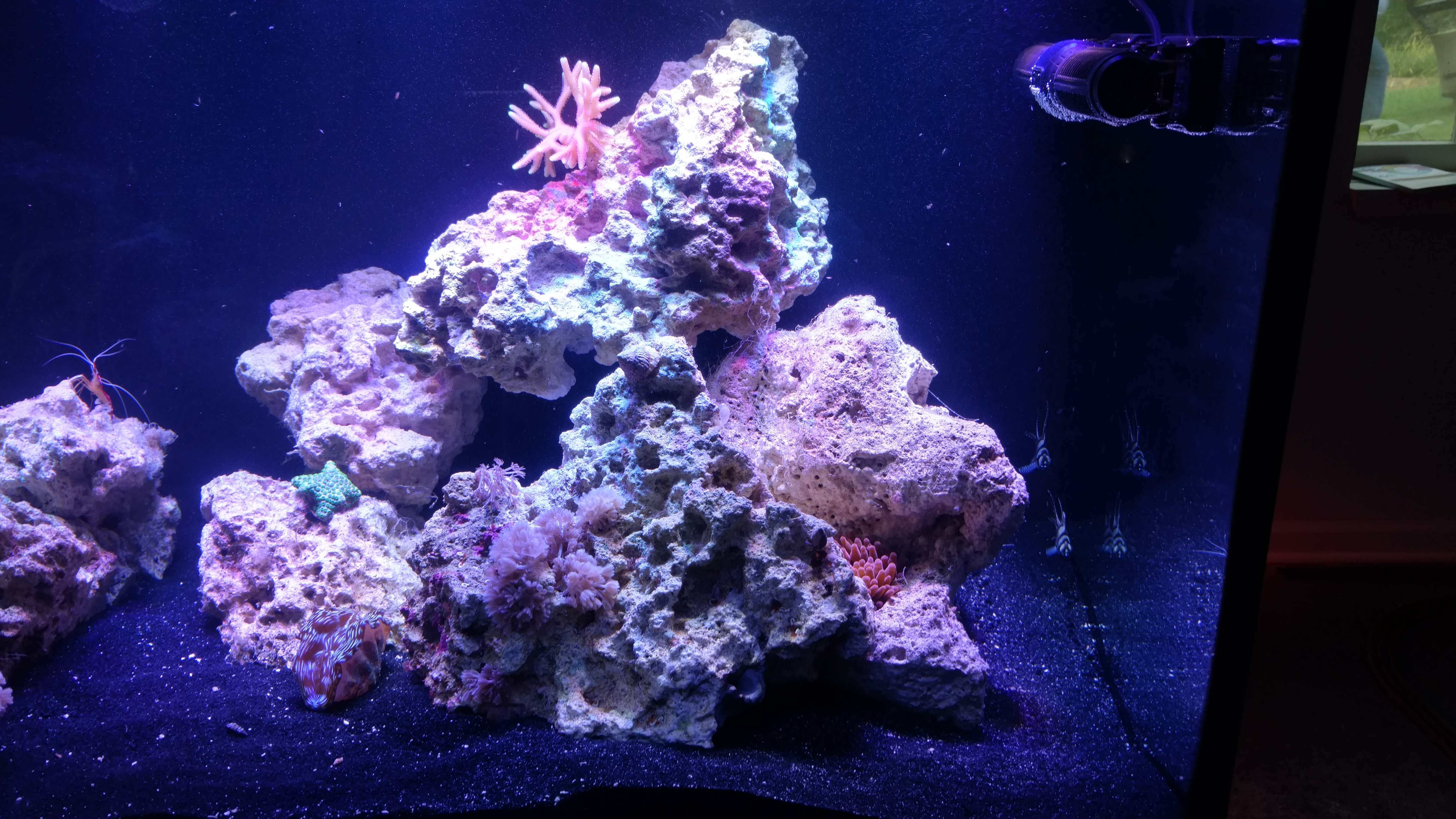75 Gallon Reef Added To Saltwater System Advanced