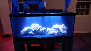 how to setup aquarium fish tank reef