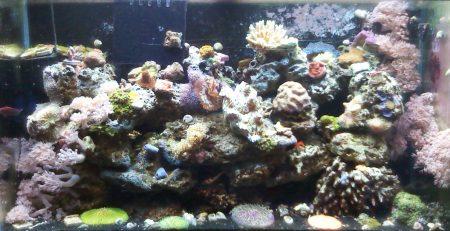Natural Reef Aquarium Method   Advanced Aquarium Concepts