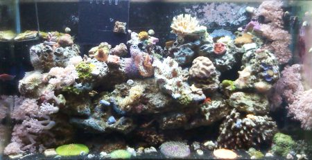 Natural Reef Aquarium Method | Advanced Aquarium Concepts