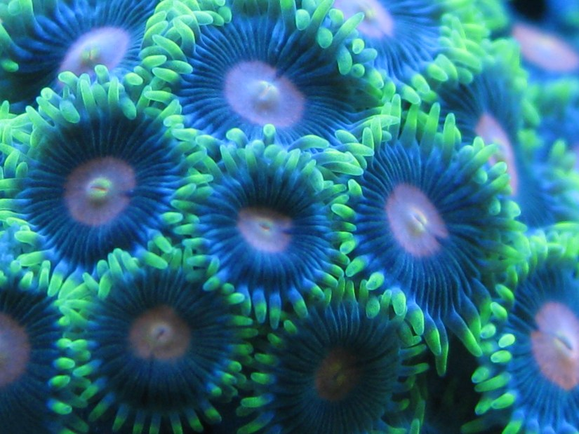 How to increase coral colors