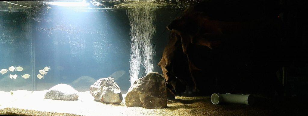 best aquarium lights lighting guide freshwater saltwater reef