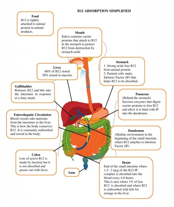 Blog-8-Vitamin-B12-Graphic-page-001-1-791x1024