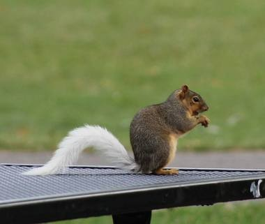 unusual white tailed squirrels