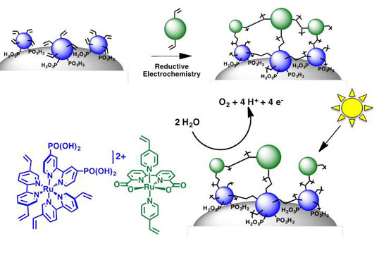 Electro-assembly of a Chromophore-Catalyst Bilayer for Water