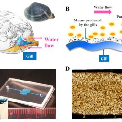 Clam-inspired nanoparticle immobilization method using adhesive tape as microchip substrate. Advances in Engineering