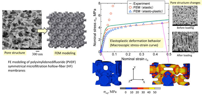 Deformation modeling of polyvinylidenedifluoride (PVDF) symmetrical microfiltration hollow-fiber (HF) membrane. Advances in Engineering