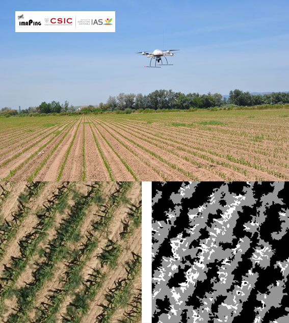Selecting patterns and features for between- and within- crop-row weed mapping using UAV-imagery (Advances in Engineering)