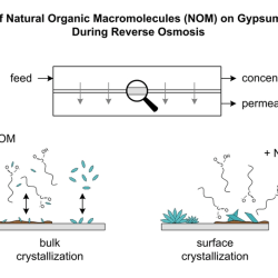 Anti-Scale Effects of Select Organic Macromolecules on Gypsum Bulk and Surface Crystallization during Reverse Osmosis Desalination