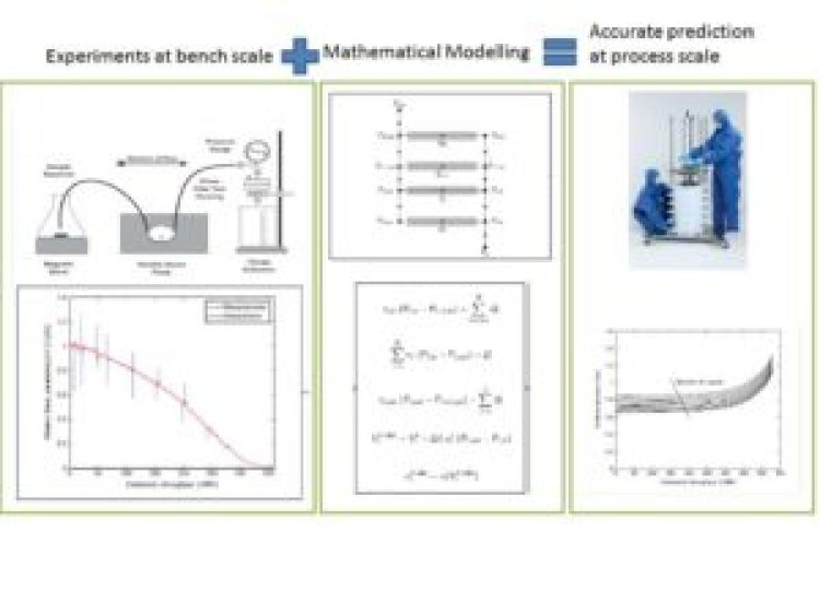 Scaling-up of multi-capsule depth filtration systems by modeling flow and pressure distribution - advances in engineering