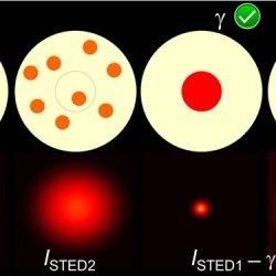 Precise background subtraction in stimulated emission double depletion nanoscopy (Advances in Engineering)