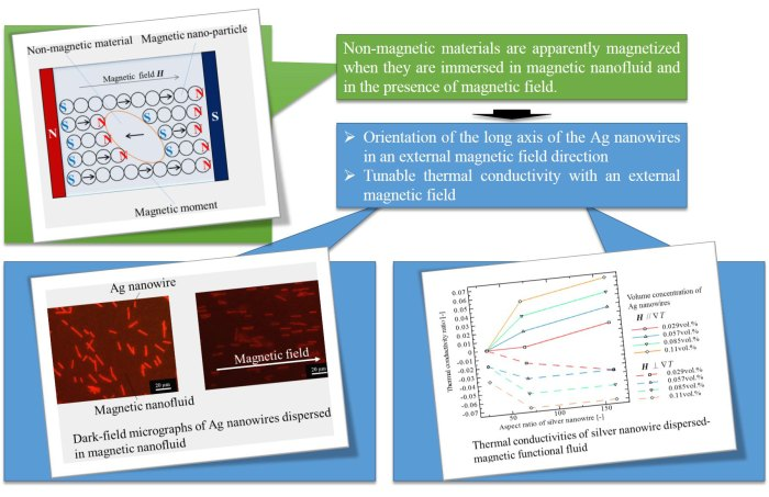 Field induced anisotropic thermal conductivity of silver nanowire dispersed-magnetic functional fluid