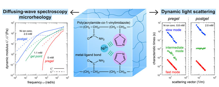 Physical gelation of supramolecular hydrogels cross-linked by metal ligand interactions Dynamic light scattering and microrheological studies