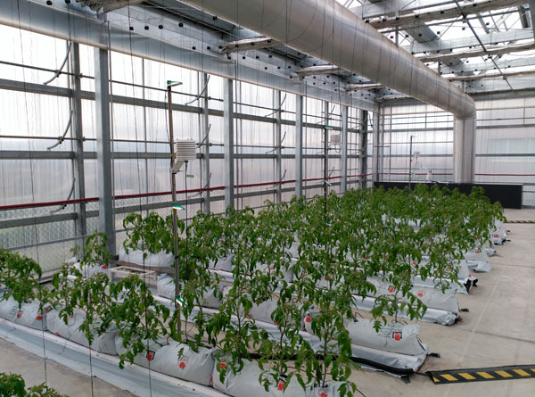Building-integrated rooftop greenhouses Advances in Engineering-5