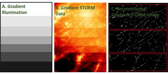 Development of targeted STORM for super resolution imaging of biological samples using digital micro-mirror device. Advances in Engineering