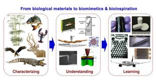 Nature's arms race inspire new materials - Advanced Engineering
