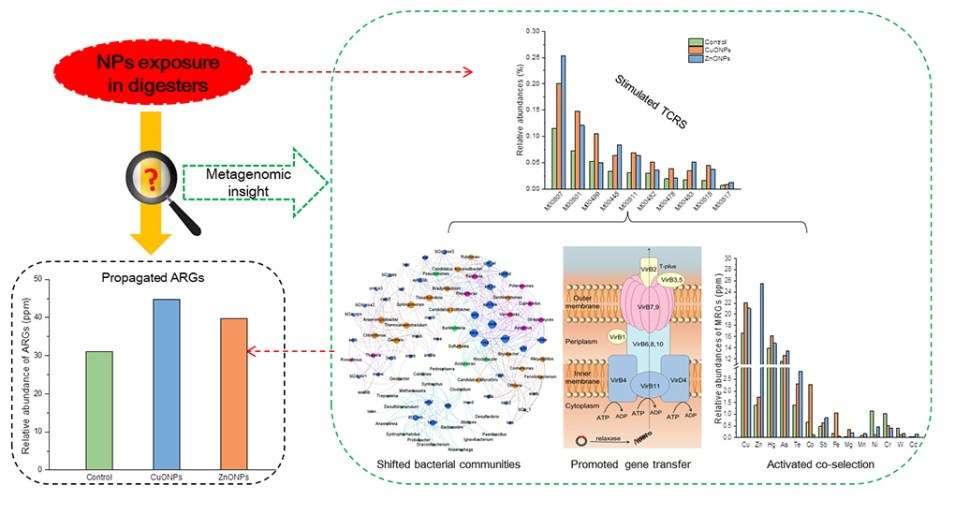 Nanoparticle and antibiotic resistance gene: Two ghosts in anaerobic digestion - Advances in Engineering