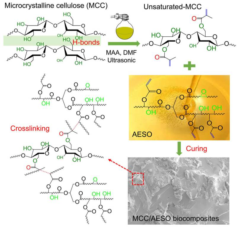 Highly Unsaturated Microcrystalline Cellulose and Its Cross-Linked Soybean-Oil-Based Thermoset Composites - Advances in Engineering