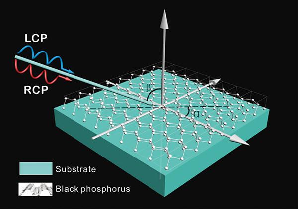 Extrinsic chirality: Monolayer black phosphorus shows dramatic optical activity - Advances in Engineering