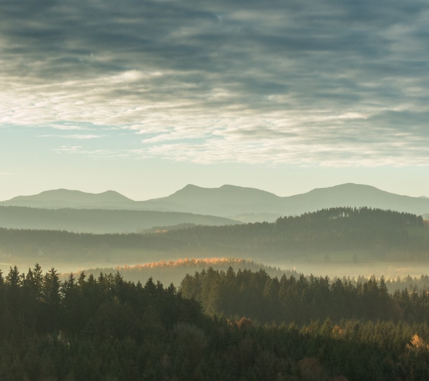 Scenic view of a forest with mountains in the background.