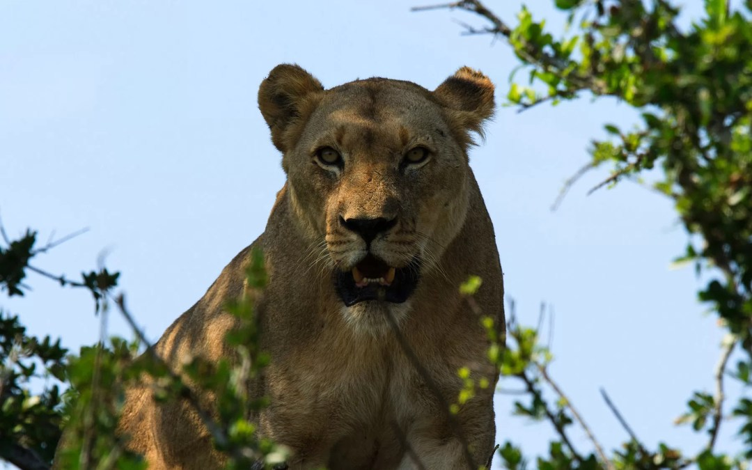 Lions, wild dogs, a tower, a memory and a warthog