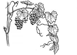 The Vine and the Branches, John 15 « Advent Bible Study