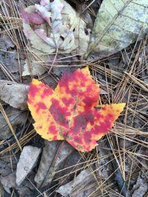 ks_leaf_small