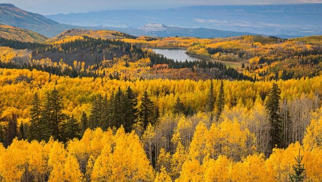 Grand Mesa Fall Colors