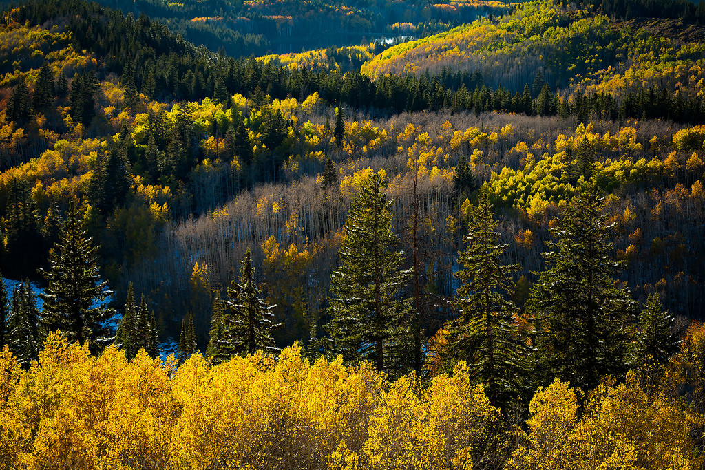 Fall On The Grand Mesa 2017