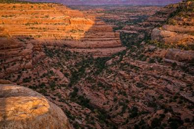 Cedar Mesa Canyon