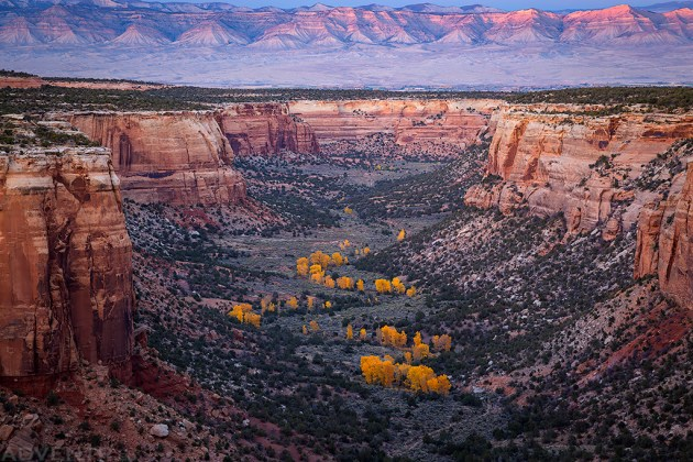 Ute Canyon Autumn