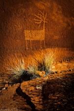 Moab Rim Elk