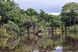 Cruising the Amazon: Brazil's Wild Rio Negro