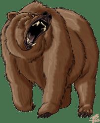 bear-01-750x1000