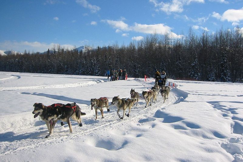 Iditarod 2019: Peter Kaiser Wins The Last Great Race