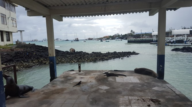 Iguanas and sea lions are part of everyday life